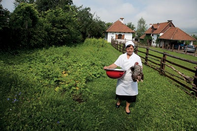 Agnes Elek gathers a rooster for her soup pot in Miklosvar