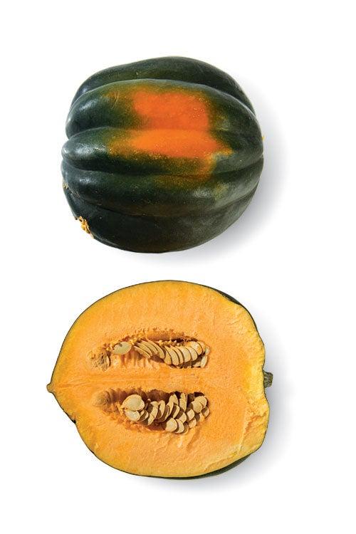 """""""acorn"""