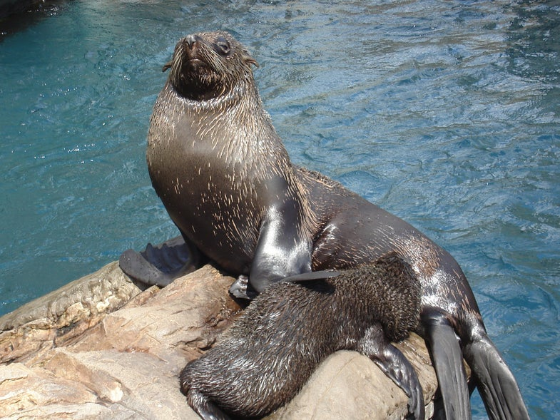 Alaskan Nursing Home Residents are Fighting for the Right to Eat Seal Blubber