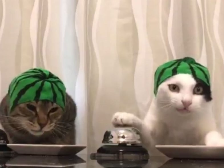 Watch These Adorable Fruit-Hat-Wearing Cats Ring Bells For Food