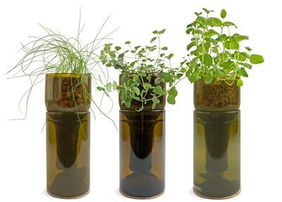 Grow Bottles Herb Gardens
