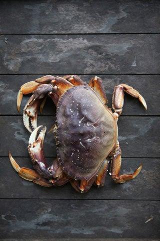 httpswww.saveur.comsitessaveur.comfilesimport2008images2008-04634-op111_dungeness_crab_480.jpg