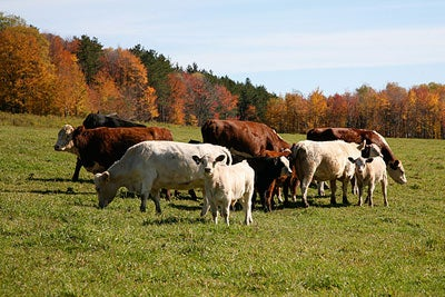 Spring Lake's Grass-Fed Beef and Lamb