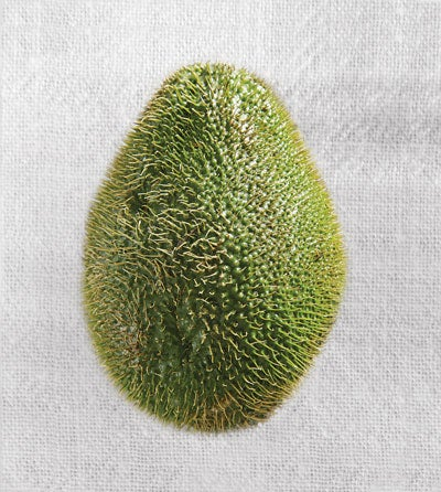 httpswww.saveur.comsitessaveur.comfilesimport2010images2010-02634-127_spiny_chayote.jpg