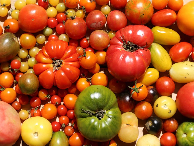 Basketful of Tomatoes for Tomato Recipes