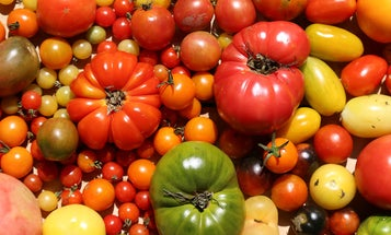 Our Best Tomato Recipes Are a Glorious Way to Celebrate the Season