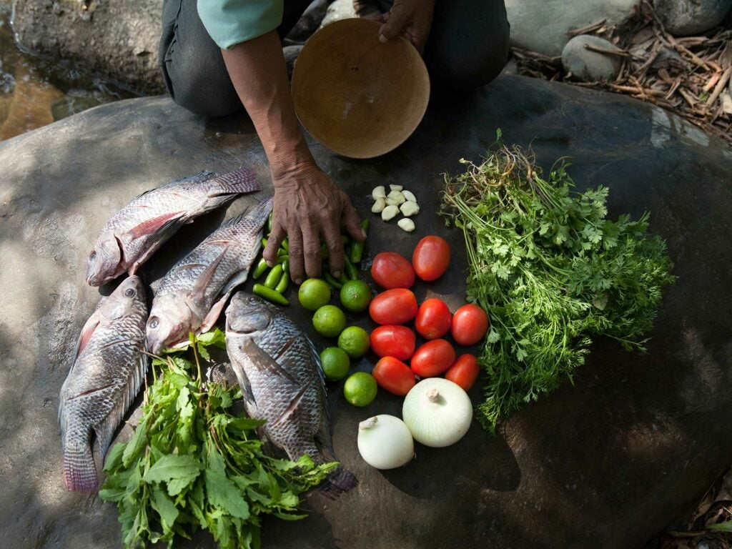 Ingredients for Stone Soup