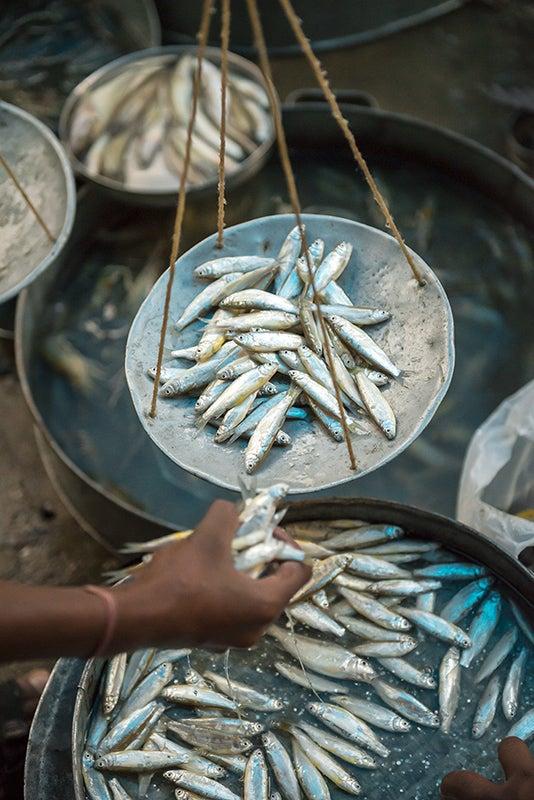 northeast-india-guwahati-fish-veg-market1