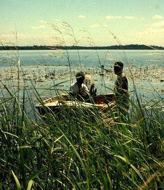 A Perfect Fall Food: Wild Rice