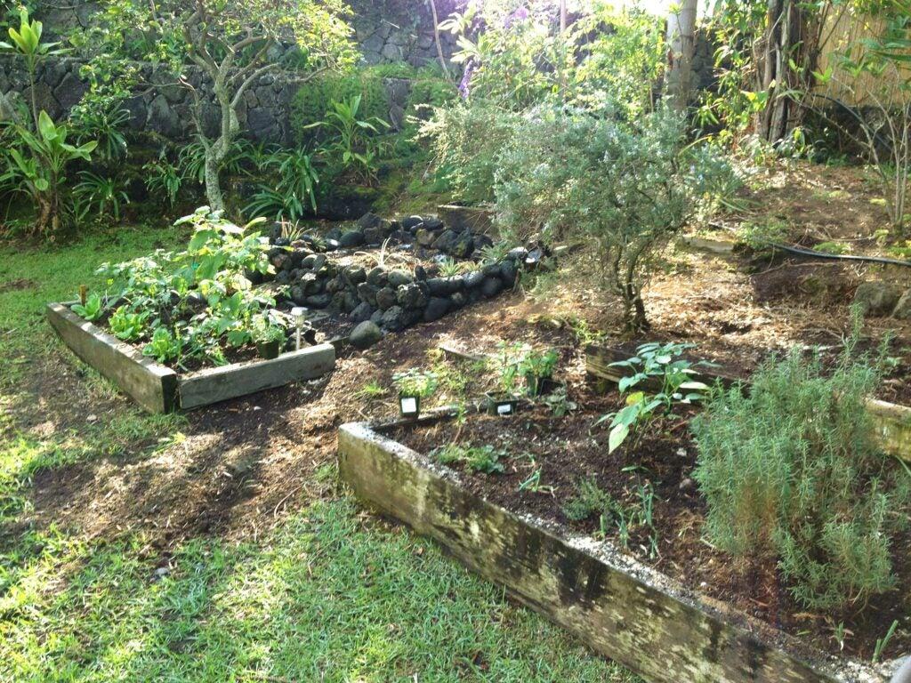 Amy Ferguson Garden