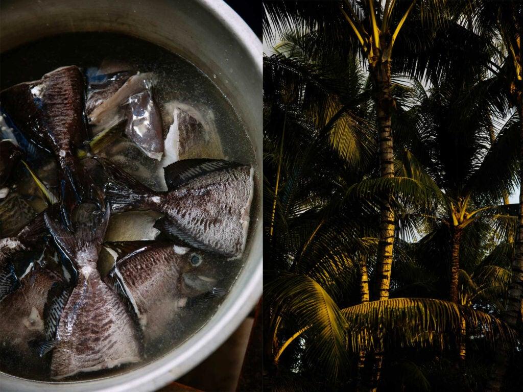 fish boiling fish
