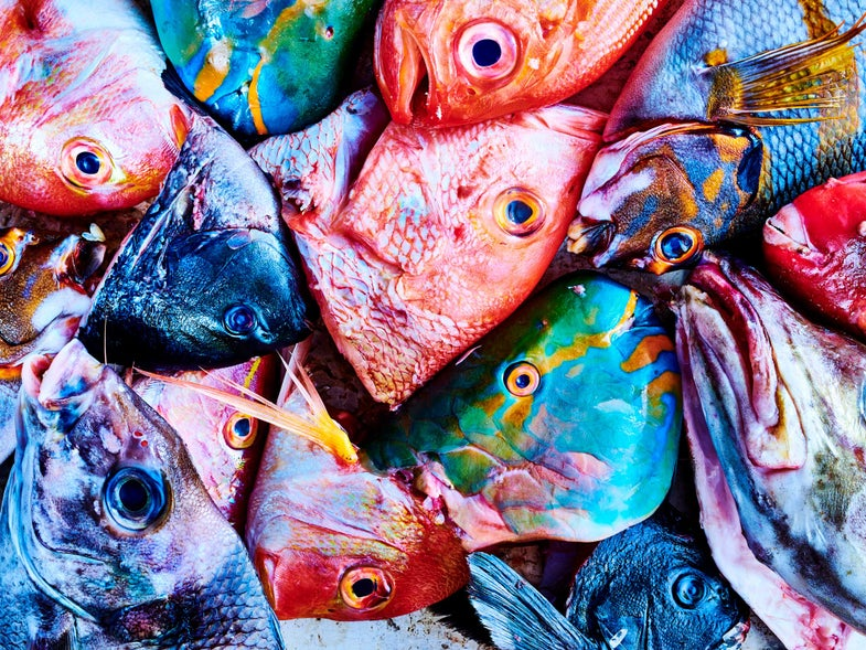 8 Exotic Fish You Should Know About