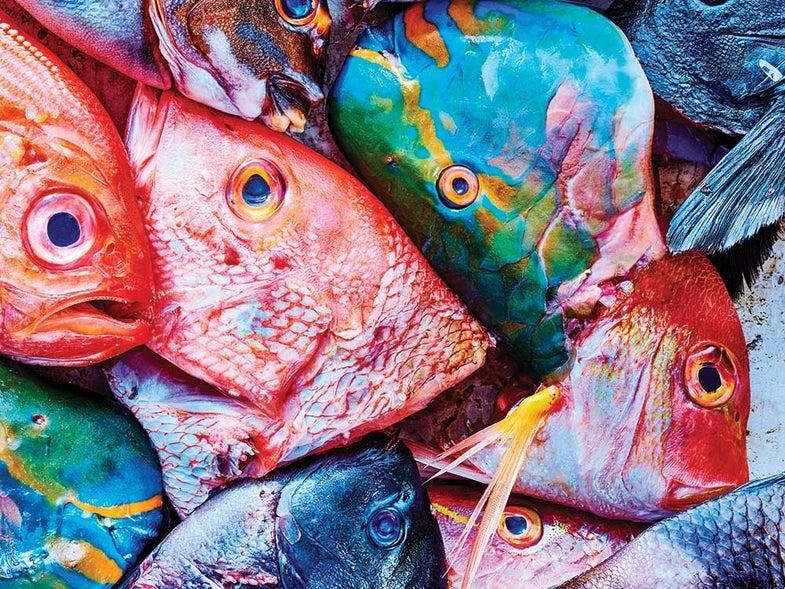 cod heads
