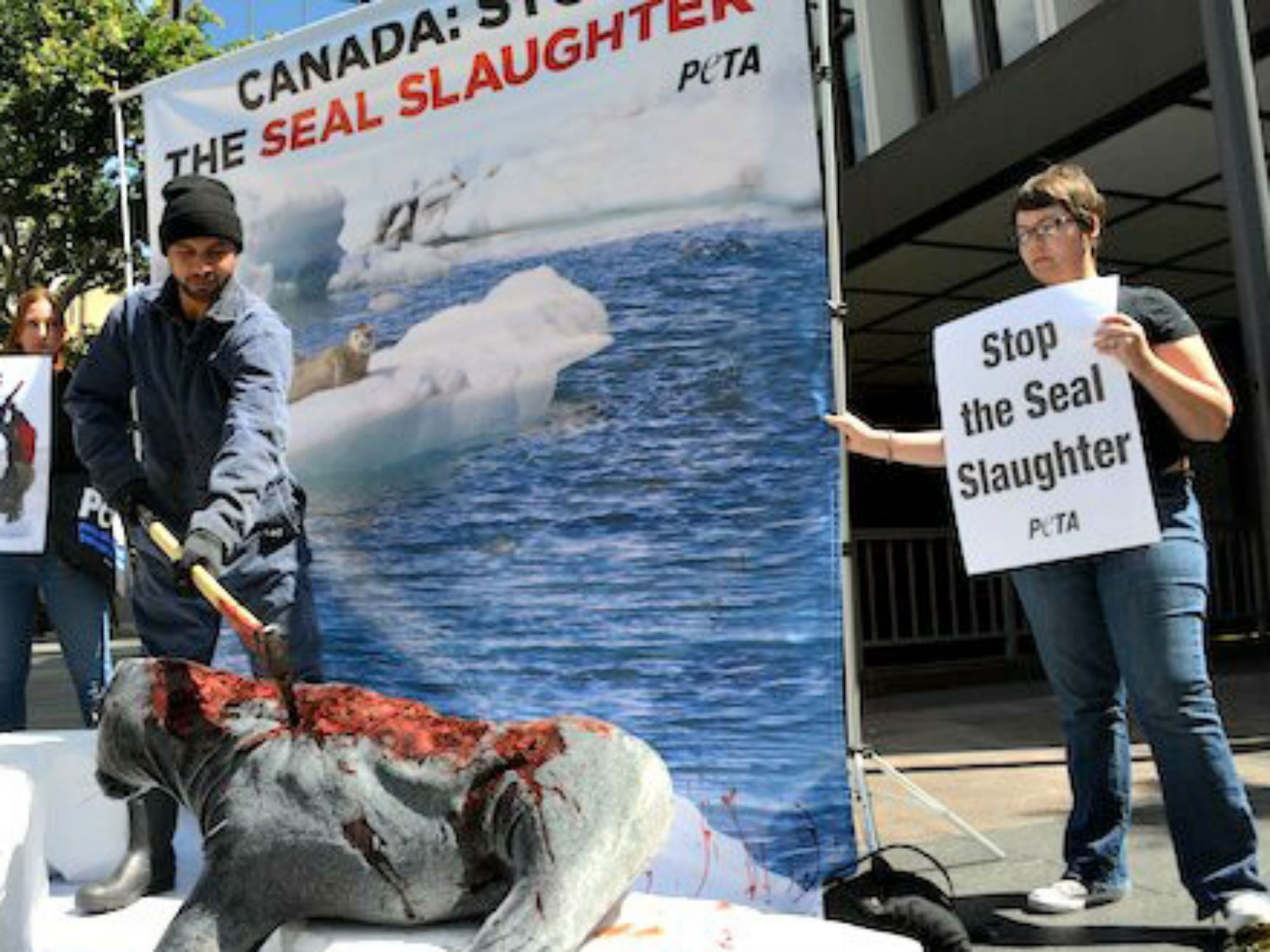 Inside Canada's Divisive Seal Hunt