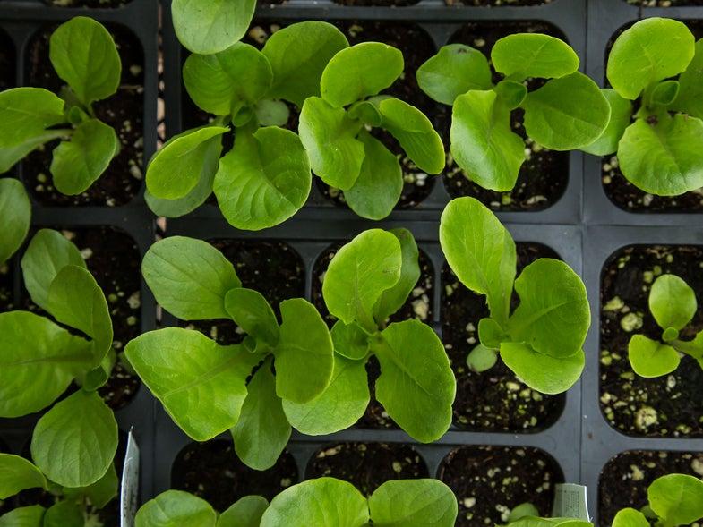 Building a Garden: Where to Start