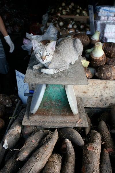 httpswww.saveur.comsitessaveur.comfilesimport2010images2010-067-Bombay_5537.jpg.jpg