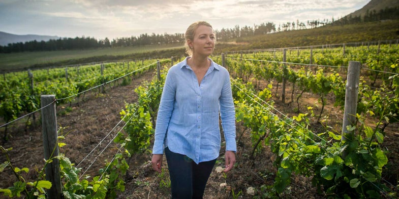 Cape Town's Wine Farms Are Rising Above the Drought