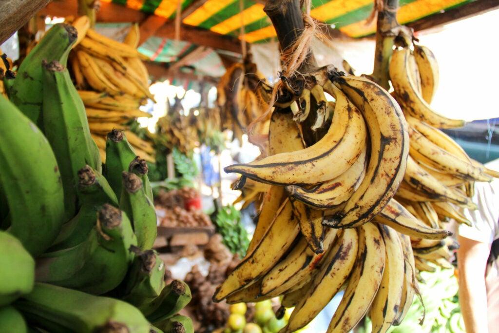Bananas in Tanzania