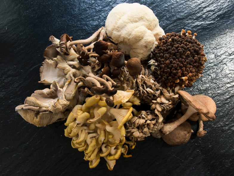 What to Do with a Delivery of Wild Mushrooms