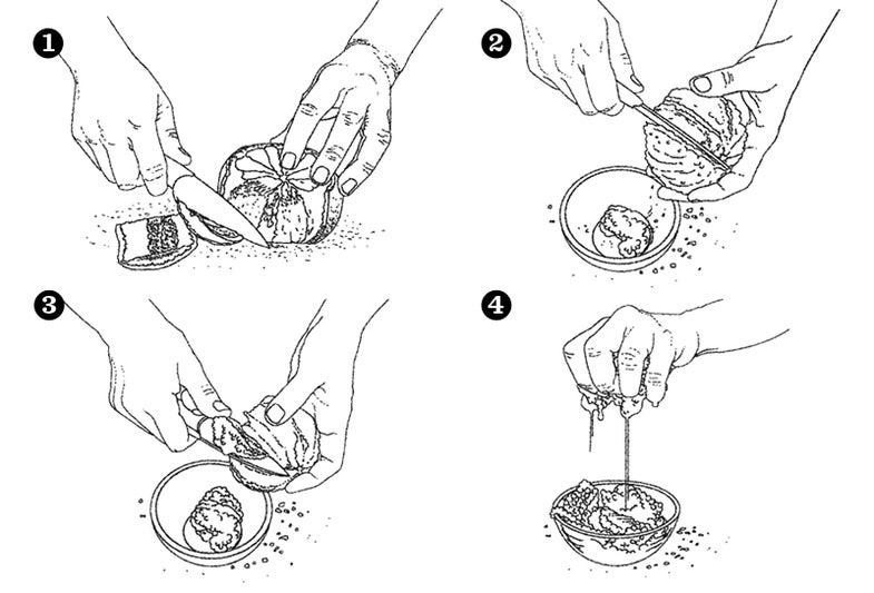 How to Segment Grapefruit
