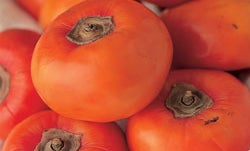 Our Immigrant Persimmon