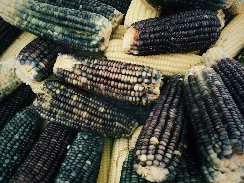 Mercado Merced Corn