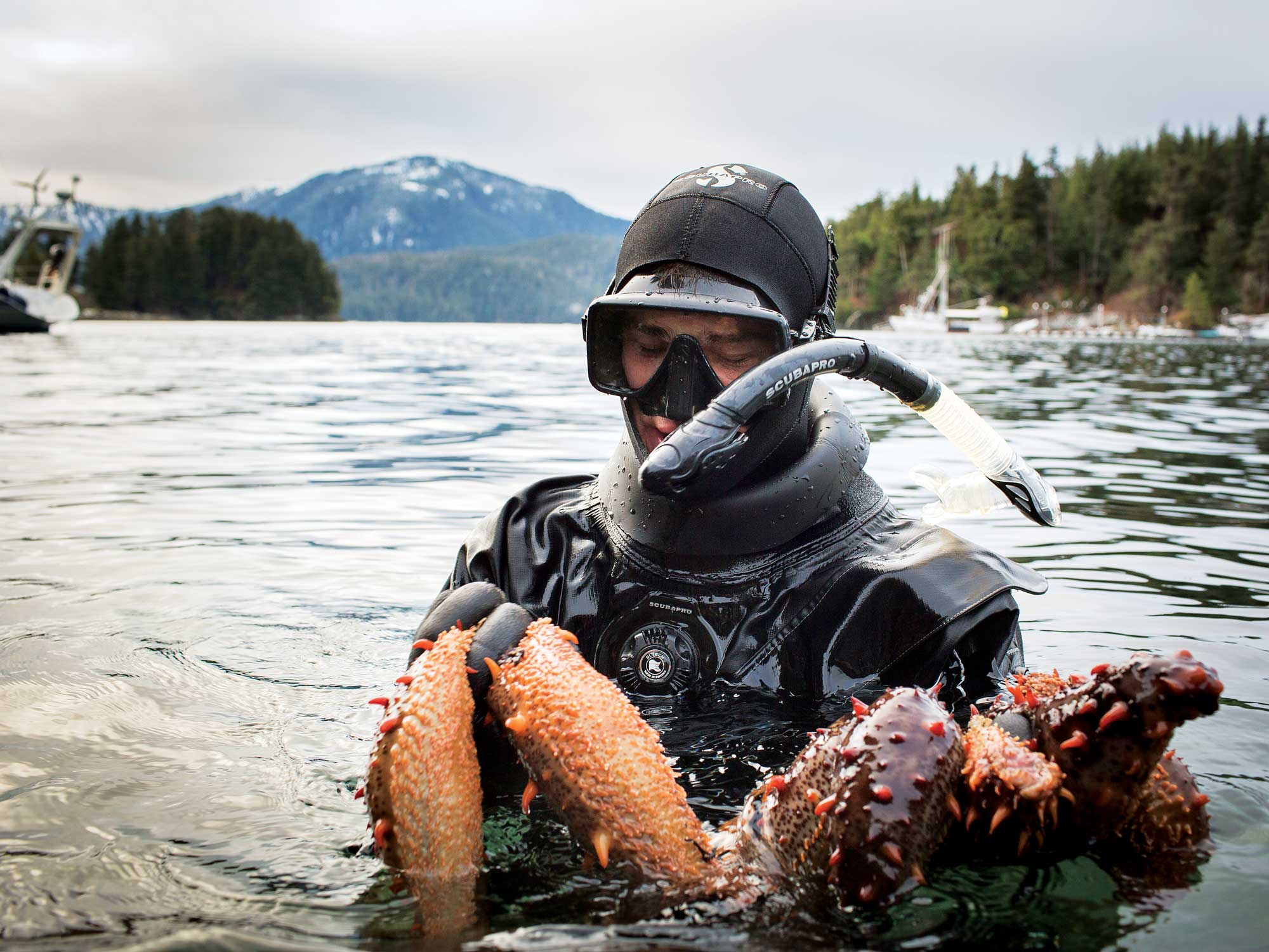 In Search of Alaska's Deadliest Catch: The Sea Cucumber