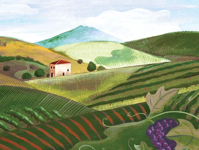 Our New Favorite Sicilian Wine
