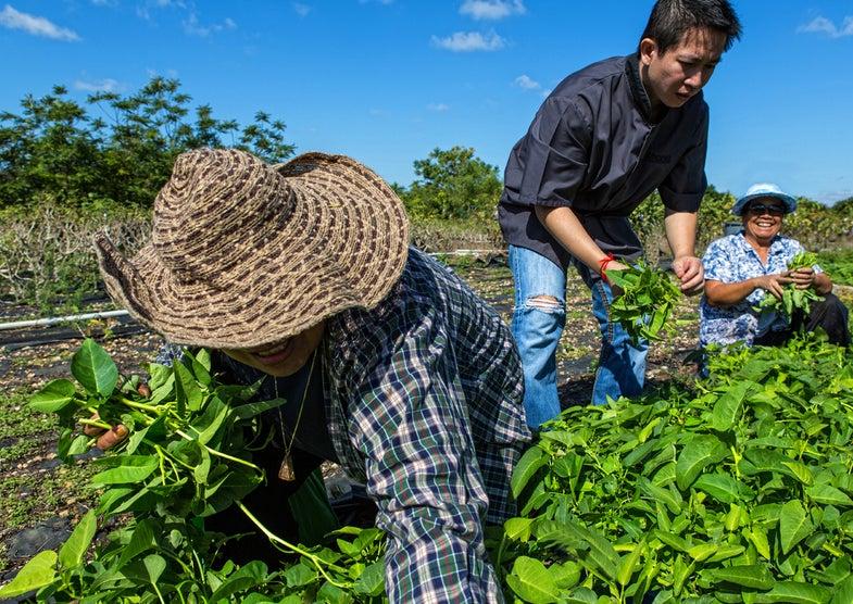 Thai Farms in South Florida