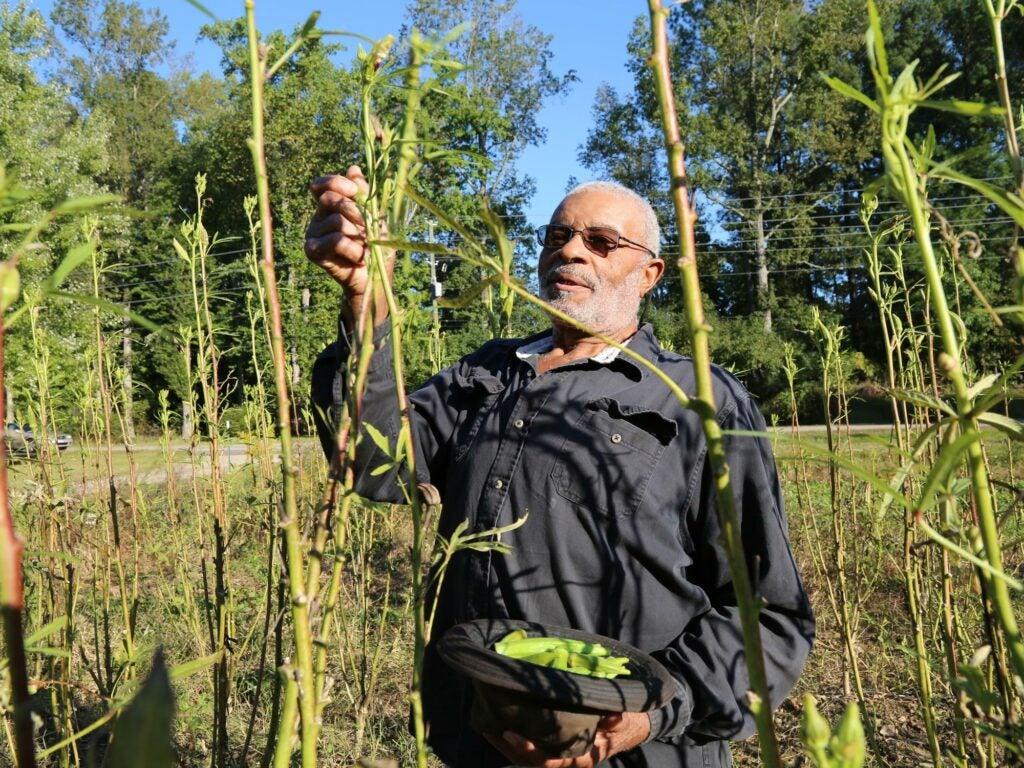 grandfather-garden-okra