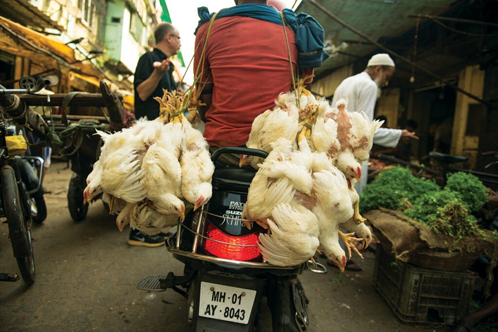 feature_west-india_mumbai_byculla-market_chickens_1200x800.jpg