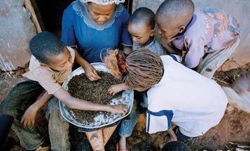 A Meal to Remember: Hunting for Termites in Kenya