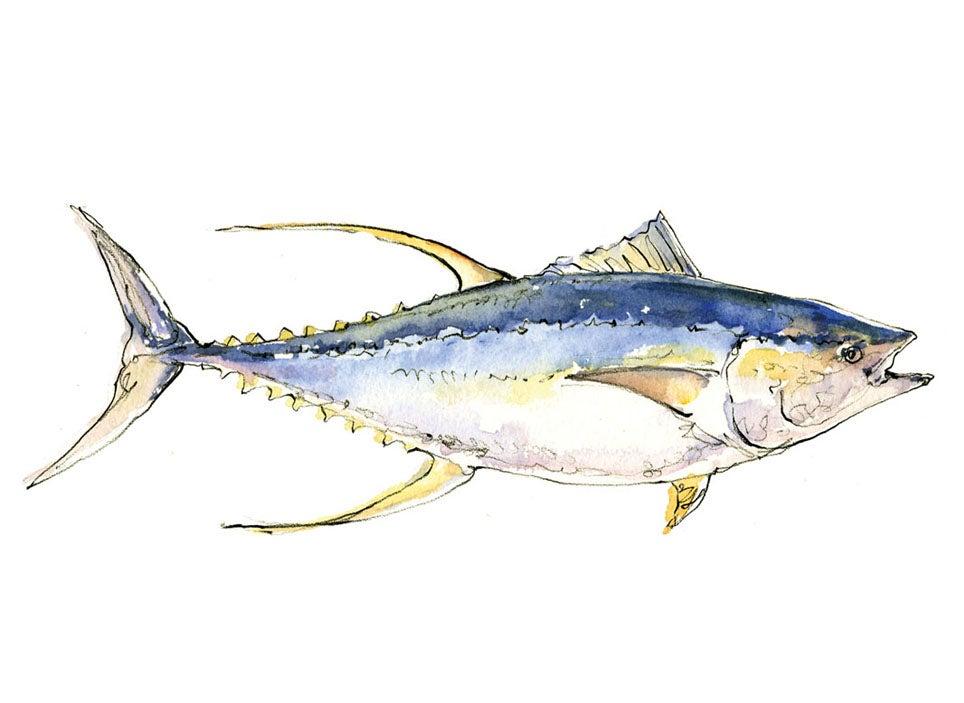 """tuna"