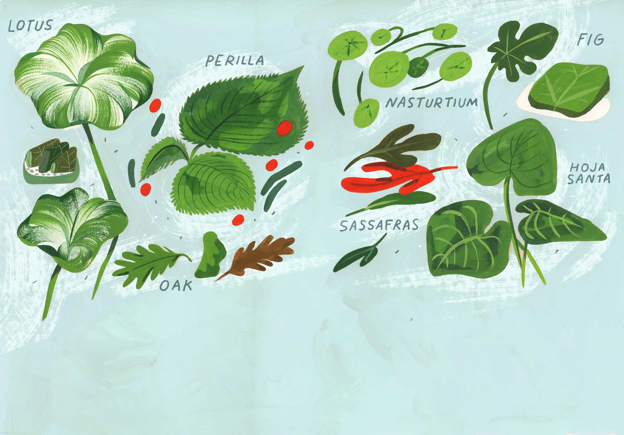 Illustration of leaves to cook with