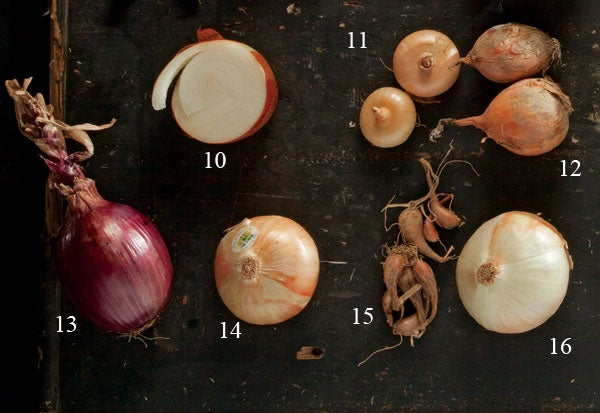 Types of onions, Texas sweets, Cipolline onions, candy hybrid, Red Bull onions, Inca sweet, French gray shallots, Walla Wallas