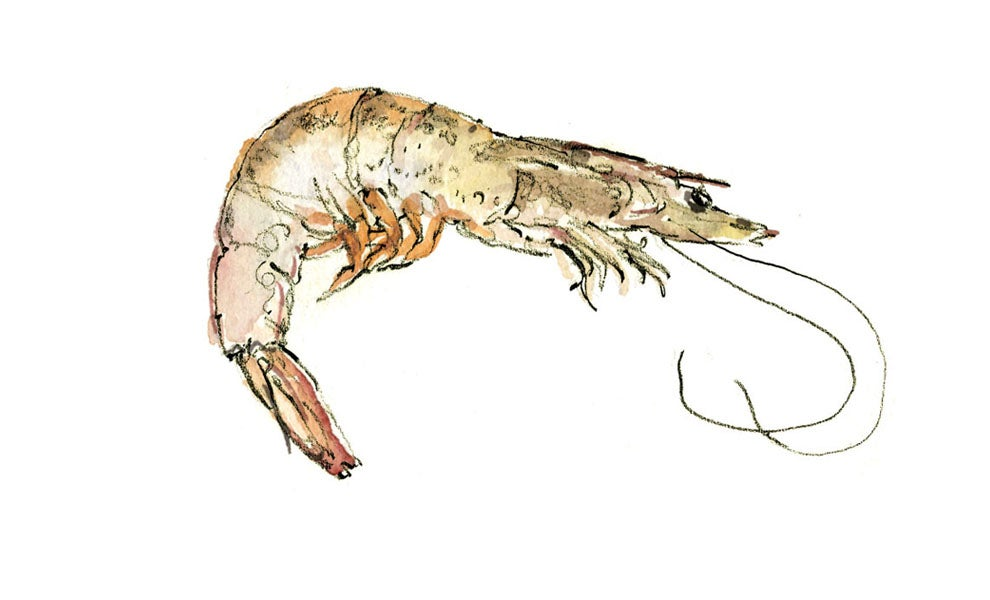 """""""shrimp"""""""