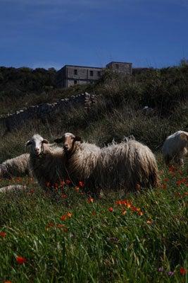 httpswww.saveur.comsitessaveur.comfilesimport2011images2011-027-SV136_-_Sicily_-_12.jpg