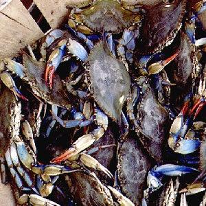 Chefs on Crabs
