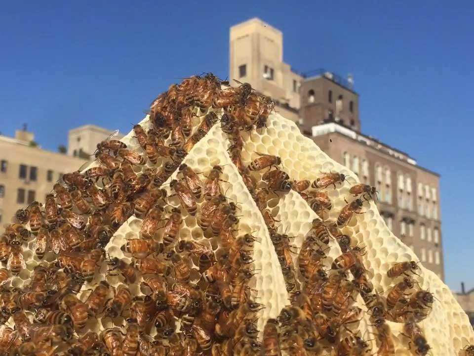 This Urban Beekeeper is Making Honey So Local it Tastes Like Your Neighborhood