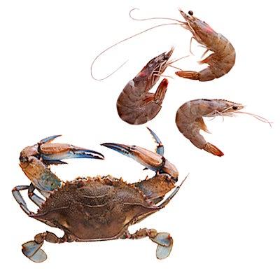 Blue Crabs and Shrimp