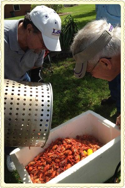Postcard: Crawfish Harvest in Erath, Louisiana