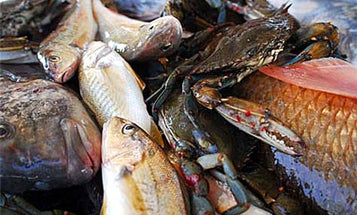 Food in the News: New Orleans Reacts to the BP Oil Spill