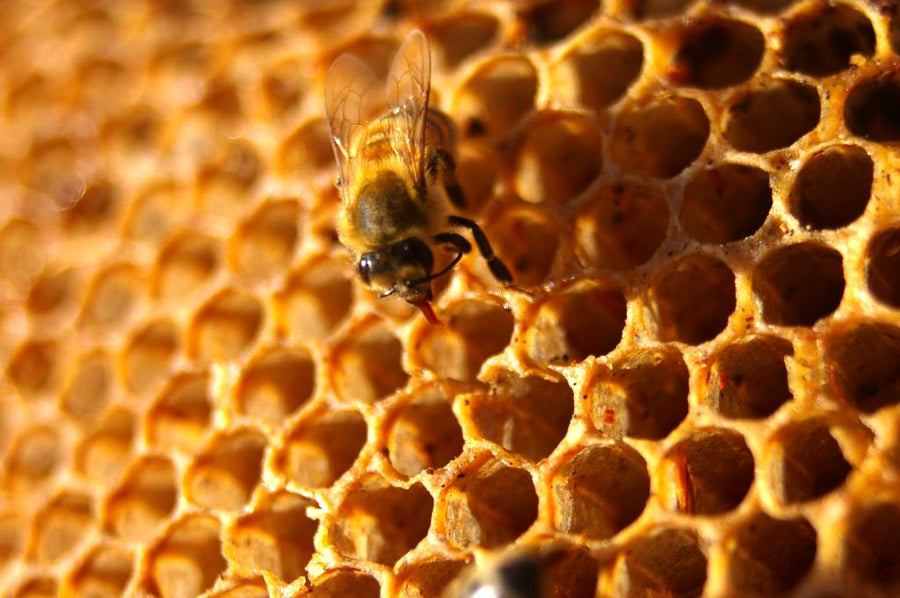 Weekend Reading: The Science of Honey, Coolio's Cooking Career, and More