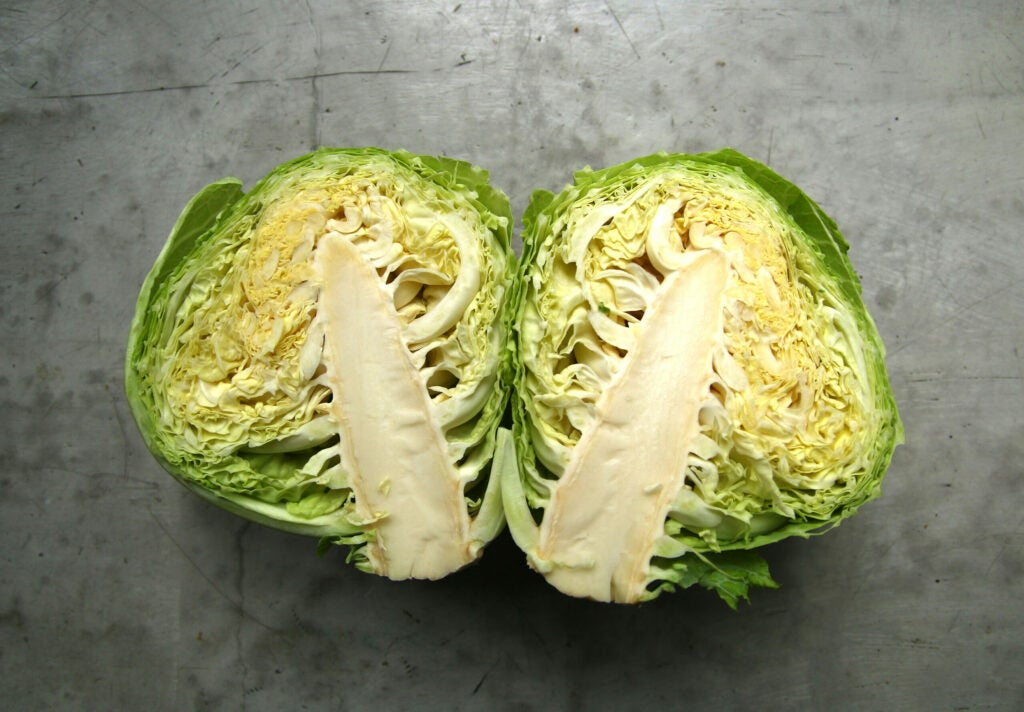 """Cabbage"""
