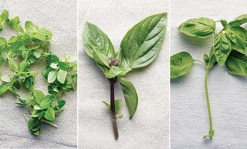 One Ingredient, Many Ways: Basil