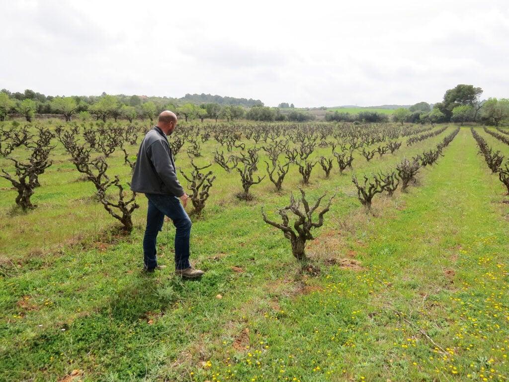Natural Wine, Partida, Creus