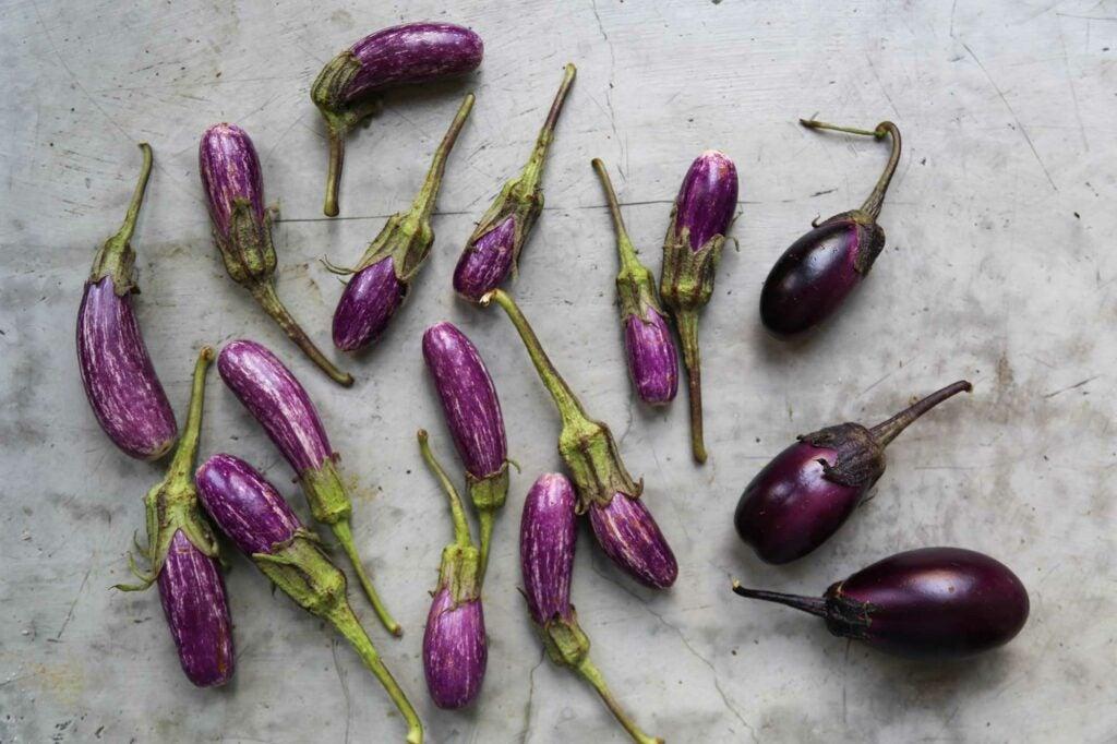 """""""eggplant"""""""