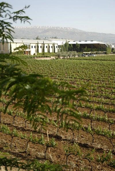 Drinking the Wines of Lebanon