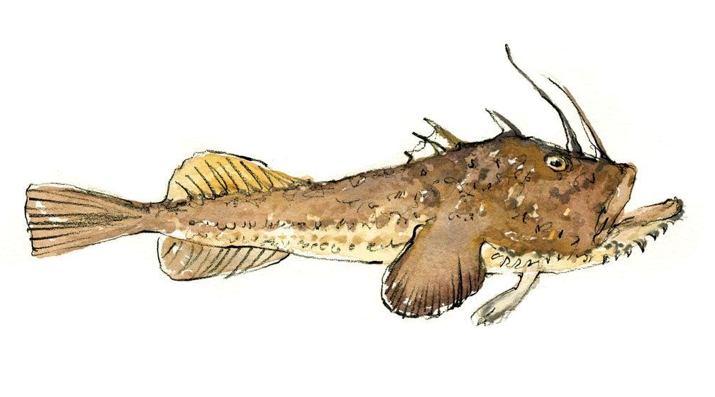 """monkfish"""