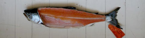 httpswww.saveur.comsitessaveur.comfilesimport2008images2008-05634-112_know_your_salmon_6_480.jpg